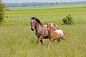 HOR 01 GL0037 01