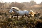 HOR 01 GL0039 01