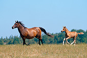 HOR 01 GL0041 01