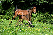 HOR 01 GL0043 01