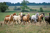 HOR 01 GL0045 01