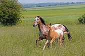 HOR 01 GL0047 01