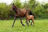 HOR 01 GL0050 01