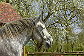 HOR 01 GL0051 01