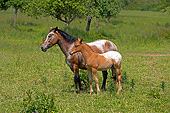 HOR 01 GL0053 01