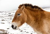 HOR 01 JE0001 01