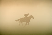 HOR 01 JE0006 01