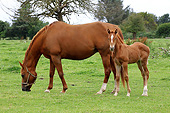 HOR 01 JE0007 01