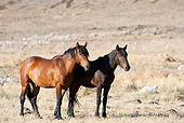 HOR 01 JM0001 01