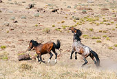 HOR 01 JM0004 01