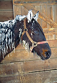 HOR 01 JN0002 01