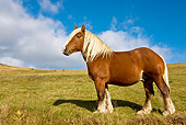 HOR 01 KH0161 01