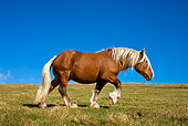 HOR 01 KH0164 01