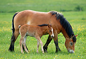 HOR 01 KH0178 01