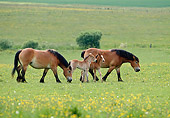 HOR 01 KH0179 01