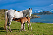 HOR 01 KH0184 01