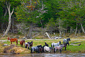 HOR 01 KH0186 01