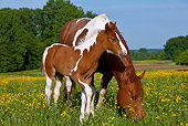 HOR 01 KH0187 01