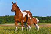 HOR 01 KH0188 01