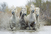 HOR 01 KH0192 01