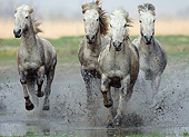 HOR 01 KH0193 01