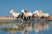 HOR 01 KH0197 01