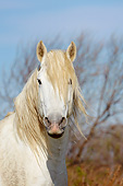 HOR 01 KH0199 01