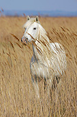 HOR 01 KH0200 01