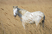 HOR 01 KH0201 01