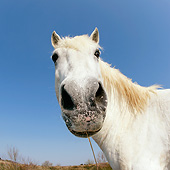 HOR 01 KH0202 01