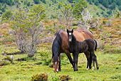 HOR 01 KH0207 01