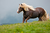 HOR 01 KH0214 01