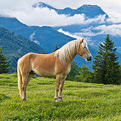 HOR 01 KH0225 01