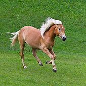 HOR 01 KH0227 01