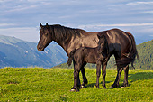 HOR 01 KH0235 01