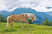 HOR 01 KH0239 01