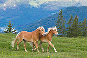 HOR 01 KH0242 01