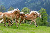 HOR 01 KH0245 01