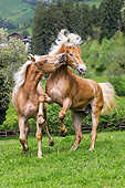 HOR 01 KH0246 01