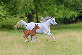 HOR 01 KH0248 01