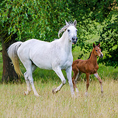 HOR 01 KH0250 01
