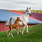 HOR 01 KH0251 01