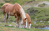 HOR 01 KH0253 01