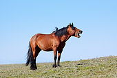 HOR 01 LS0034 01