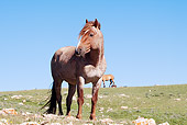 HOR 01 LS0035 01