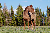 HOR 01 LS0036 01