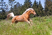 HOR 01 LS0048 01