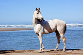 HOR 01 LS0049 01