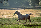 HOR 01 LS0051 01
