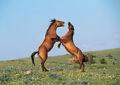 HOR 01 LS0053 01